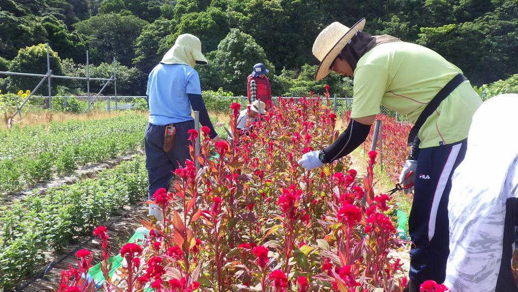 就農支援センター社会人課程8月の研修内容 | 和歌山県